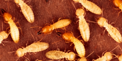 Termite-Protection-Plans