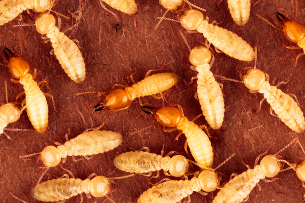 Termite-Protection-Plans